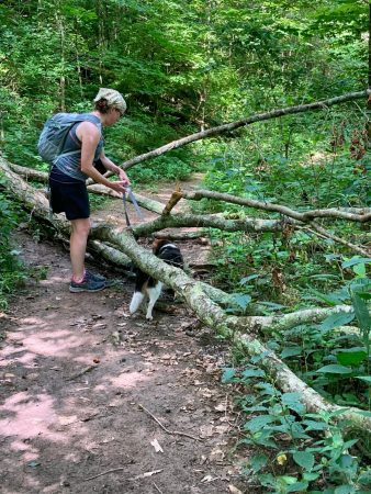 woman and beagle climbing over downed tree
