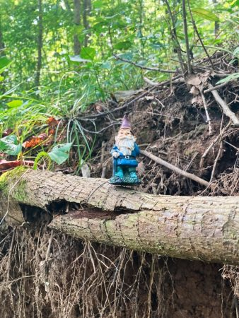 small gnome on log